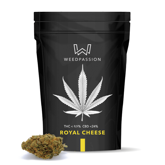 Weedpassion Royal cheese 24% cbd 1 gr.